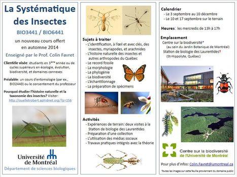 Un nouveau cours offert en automne 2014 à l'Université de Montréal | Insect Archive | Scoop.it