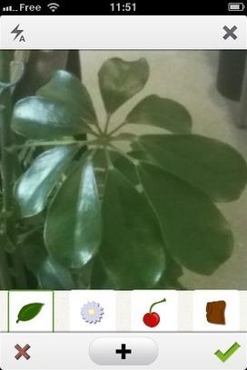 Une application pour identifier les plantes | Gazette du numérique | Scoop.it