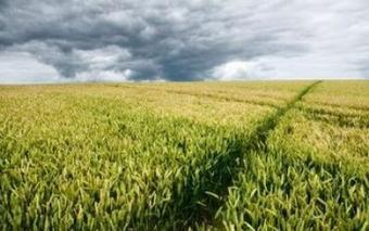 The Folly of Big Agriculture: Why Nature Always Wins | The Indypendent | Food issues | Scoop.it