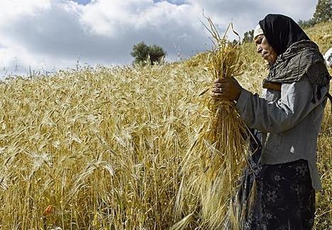 Les femmes rurales sont celles qui sont les plus touchées par la pauvreté   CIHEAM Press Review   Scoop.it