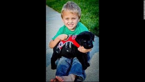 Luke and Jedi: A boy and his dog fight type 1 diabetes   grants   Scoop.it