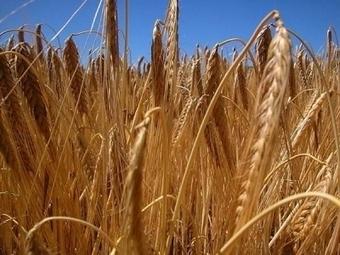 Le changement climatique affecte déjà la production alimentaire mondiale | Agriculture Urbaine | Scoop.it