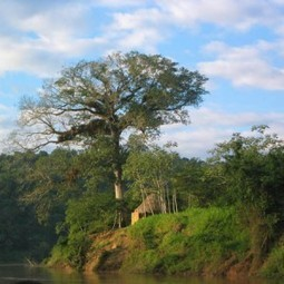 Are Latin America's Protected Areas Effective at Conserving Nature? | Environnement | Scoop.it