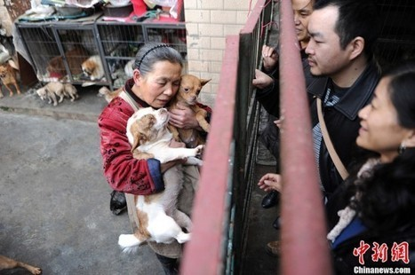 Chinese Grandma Spends All Her Life Savings Taking Care of Stray Dogs and Cats | Strange days indeed... | Scoop.it