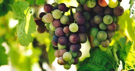 Mais pourquoi la Chine met-elle des vignes en orbite ? | Le Vin et + encore | Scoop.it