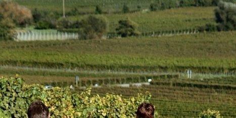 A vélo à travers les vignobles en Gironde | Agritourisme et gastronomie | Scoop.it
