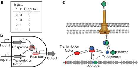 Genetic programs constructed from layered logic gates in single cells   Evolutionary and Synthetic Biology: Design devices for addressed antiviral inhibition   Scoop.it