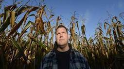 Corn prices plunge amid oversupply, retreat from ethanol | Sustain Our Earth | Scoop.it