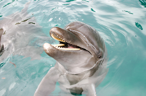 10 fascinating dolphin facts | All about water, the oceans, environmental issues | Scoop.it