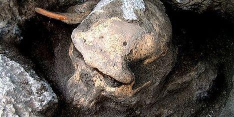 L'analyse d'un crâne de 1,8 million d'années suggère que nos ancêtres formaient une seule espèce | Merveilles - Marvels | Scoop.it