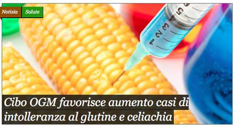 Cibo OGM favorisce aumento casi di intolleranza al glutine e celiachia | Italica | Scoop.it