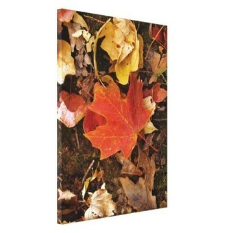 Red Maple Leaf Gallery Wrapped Canvas | Z Photography | Scoop.it