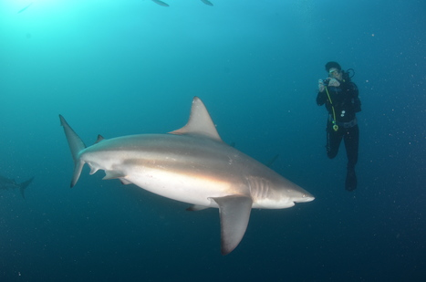 Shark Diving in South Africa - Monkeys and Mountains | Travel Blog | Adventure Travel - Hang on Tight | Scoop.it