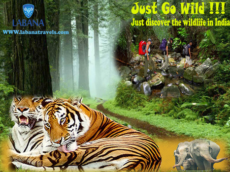Unlock the Green Secrets of Real India With Wildlife Tours in India | Wildlife tours in India | Scoop.it