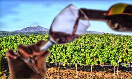 Gli uomini e le tecnologie dell'agroalimentare made in Sicily | Il piacere del bere | Scoop.it