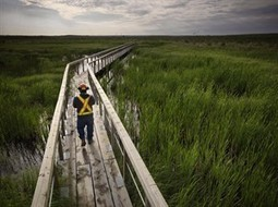 'We can't replace nature:' Oilsands wetland reclamation a mixed success | SWGi Engineering News | Scoop.it