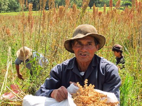 El milagro de las lombrices y la quinua | lombricultura | Scoop.it