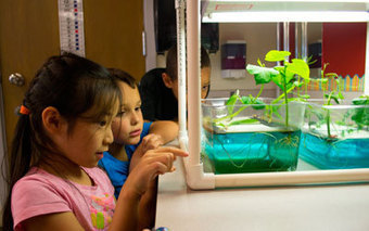 Third graders learning hydroponic gardening | School Gardening Resources | Scoop.it