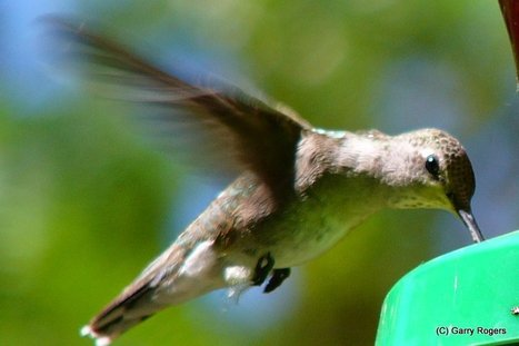 Dwindling Bird Numbers Linked to Pesticides-Dutch Study | Garry Rogers Nature Conservation News | Scoop.it