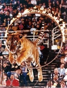 CHRISTMAS IS NO HOLIDAY FOR CIRCUS ANIMALS By Ira Fischer | gami'sworld | Scoop.it