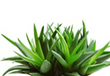 Save Your Skin With Aloe Vera | Health Supplements | Scoop.it