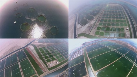 Largest aquaculture operation in the world... | National Aquaculture Group (NAQUA) | Scoop.it