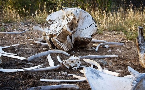 Kenya suspends wildlife officials over poaching  - Telegraph | Conservation & Environment | Scoop.it