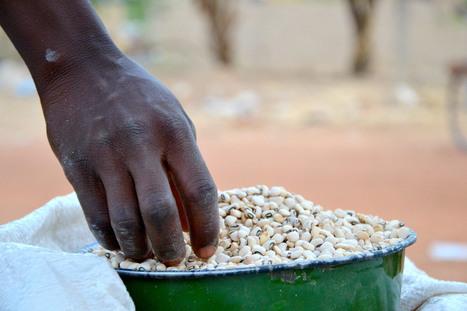 Au Burkina Faso, les résistants au réchauffement climatique | Mes News A La Une | Scoop.it