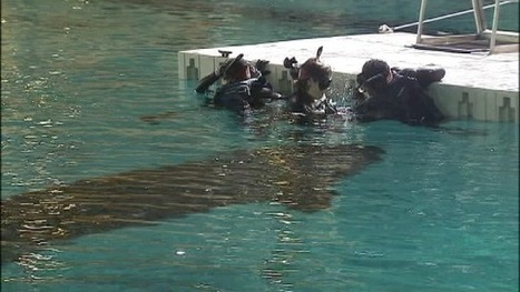 Wounded Warriors swim with whales at Ga. Aquarium   Sports Ethics: Newcomer, D.   Scoop.it
