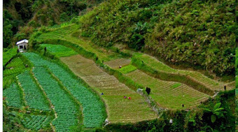 Rice Terraces in Cervantes, Ilocos Sur | The Traveler | Scoop.it
