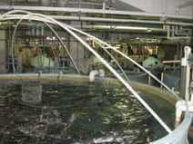 New Fish Farms Move from Ocean to Warehouse   Worldwatch Institute   Sustainable Farming   Scoop.it