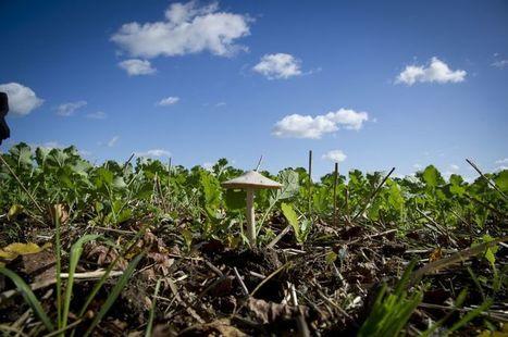 Les fondements de l'agro-écologie | Questions de développement ... | Scoop.it