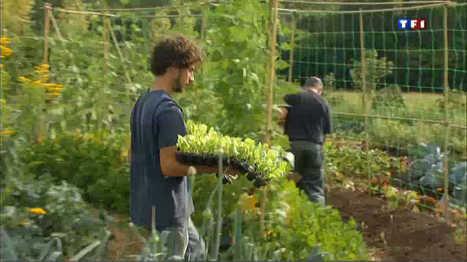Dans l'Eure, les agriculteurs innovent avec la permaculture (TF1/Le journal de 13h )   ECONOMIES LOCALES VIVANTES   Scoop.it