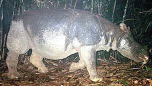 The South East Asia Weekly » 341 Rhinos Killed from Poaching for ... | What's Happening to Africa's Rhino? | Scoop.it