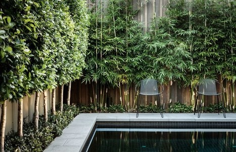 7 Ways to Make Your Yard More Private | studioaflo | Scoop.it
