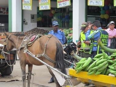 La Nación » Iniciaron los controles de tránsito en Pitalito   no al maltrato animal   Scoop.it