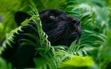 Go on a Bonus-Filled Jungle Safari at Lotus Players Club - AskGamblers | Lotus Group of Online Casinos | Scoop.it