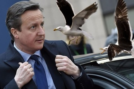 David Cameron's Seagull Hypocrisy - Timorous Beastie   pest control   Scoop.it