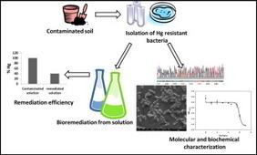Mercury remediation potential of a mercury resistant strain Sphingopyxis sp. SE2 isolated from contaminated soil | bioremediation | Scoop.it