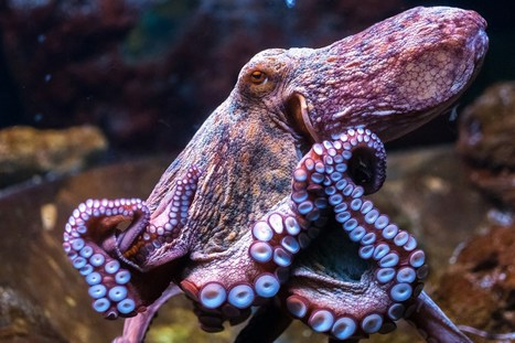 How much consciousness does an octopus have? Or an iPhone? (Wired UK) | Connected Learning | Scoop.it