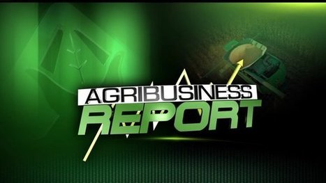 AGRIBUSINESS: Ohio Farmer Notices Immediate Difference With Cover Crops - whotv.com | Agriculture | Scoop.it