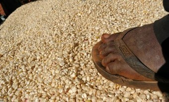 Grain Warehouse Projects Stall for Lack of Cash – Dial 254 - Kenyan News Online | Local Grain News | Scoop.it