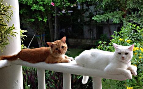 Il gattaccio e la gattina | Medicina Naturale | Scoop.it
