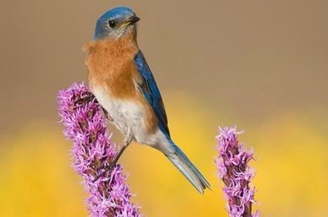 Growing Bird Seed | garden farm | Scoop.it