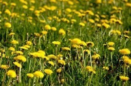 Finalmente sboccia la primavera: le erbe spontanee da raccogliere e gustare | Country Club Da Cesco - Trail Monte Grappa news | Scoop.it
