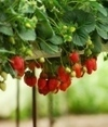 Organic farming is rarely enough | Vertical Farm - Food Factory | Scoop.it