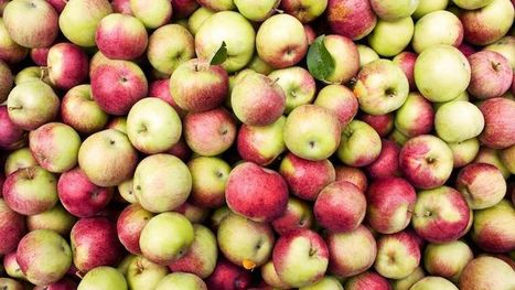 Researchers Just Figured Out a New Way to Keep Apples Fresh for Weeks | News we like | Scoop.it