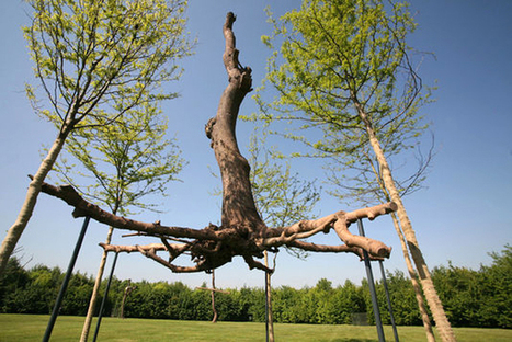 Giuseppe Penone: Elevation | Art Installations, Sculpture, Contemporary Art | Scoop.it
