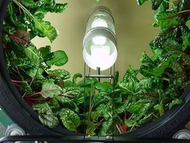 Inside Urban Green: Here a Hydro, There a Hydro, Everywhere a Hydroponics Farm | Vertical Farm - Food Factory | Scoop.it