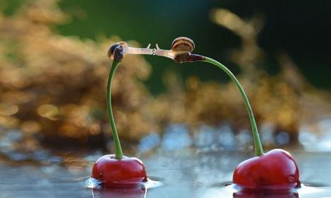 Worlds of Snails, amazing portraits of 'ordinary slow-life' | Animals | Scoop.it